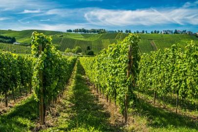 Lux Vineyard